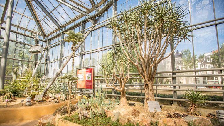 De exotische planten uit Zuid-Afrika hebben vaak een bijzondere, eeuwenoude geschiedenis. Beeld Eva Plevier