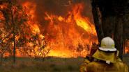 Twee doden en 100 huizen verwoest bij apocalyptische bosbranden in Australië