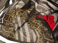Vrouw neemt haar slang mee in Amsterdams casino