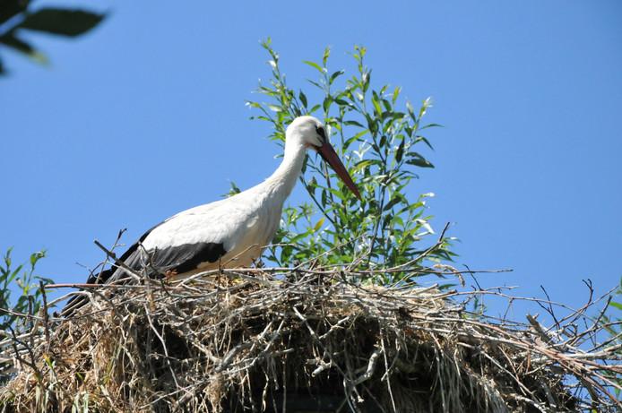 Een ooievaar op een nest.