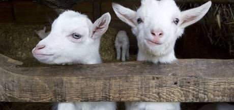 'We willen niet meer praten met intiatiefnemers kinderboerderij Nijverdal'