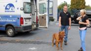 Gemeente werkt samen met dierenasiel van Sint-Truiden