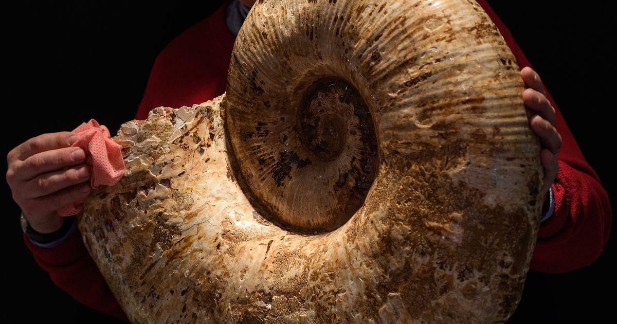 Fossiel Tv Meubel.Man Vindt Enorme Fossiel Van 190 Miljoen Jaar Oud Aan Engelse Kust