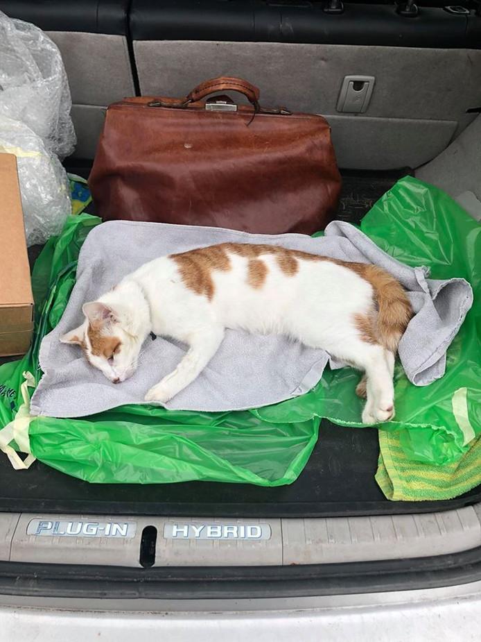 De dierenarts verwijderde bij Sammie een kogel, waarschijnlijk uit een luchtbuks. De kat van de familie Hetebrij uit Wijhe overleefde de aanval niet.