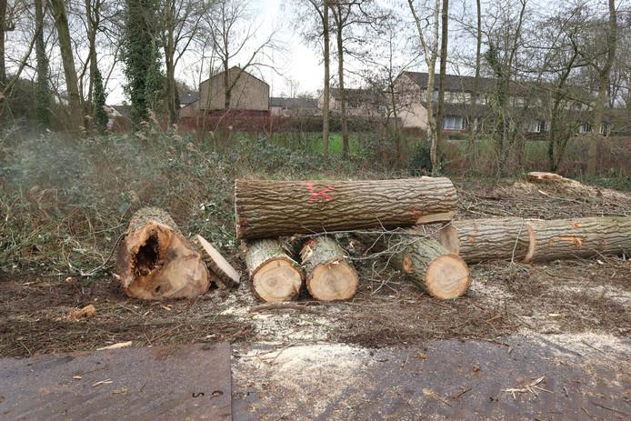 Bomenkap in De Maten.