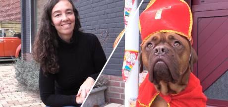 Deze Sinterklaashond verovert de harten in Brabant
