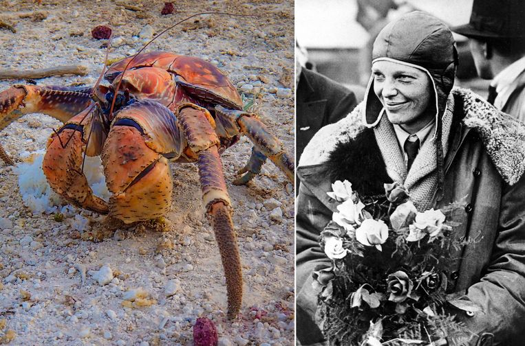 Het team, dat gefinancierd wordt door National Geographic, gelooft dat de krabben de botten van Earhart versleepten naar hun holen.