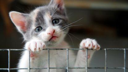 Minder dieren belanden in asiel: teken van goed dierenwelzijnsbeleid volgens Weyts