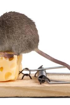Een muisje met keelproblemen