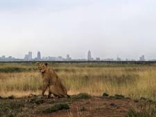 Wetenschappers waarschuwen: zesde massa-uitsterving op komst