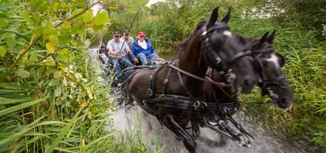 Paarden krijgen na vierdaagse misschien extra bakje haver van hun verzorger