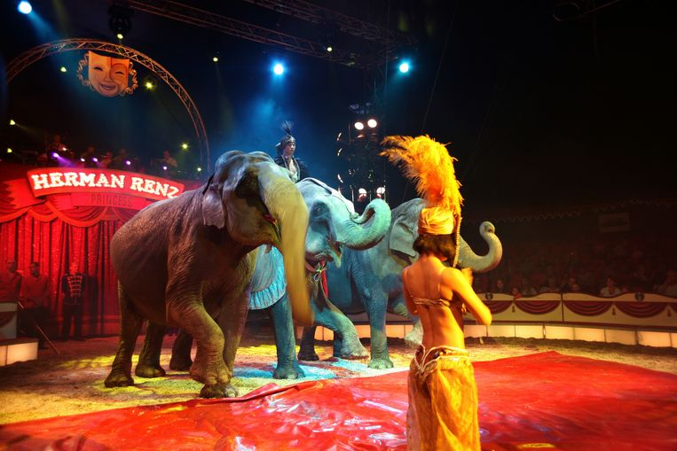 De olifanten van circus Renz voor het verbod op gebruik van wilde dieren.    Beeld Ton Koene