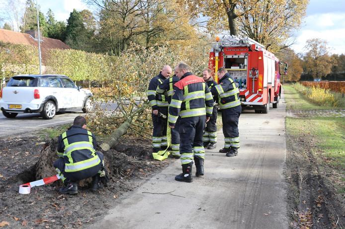 Omgevallen boom op Wolverstraat in Duizel.