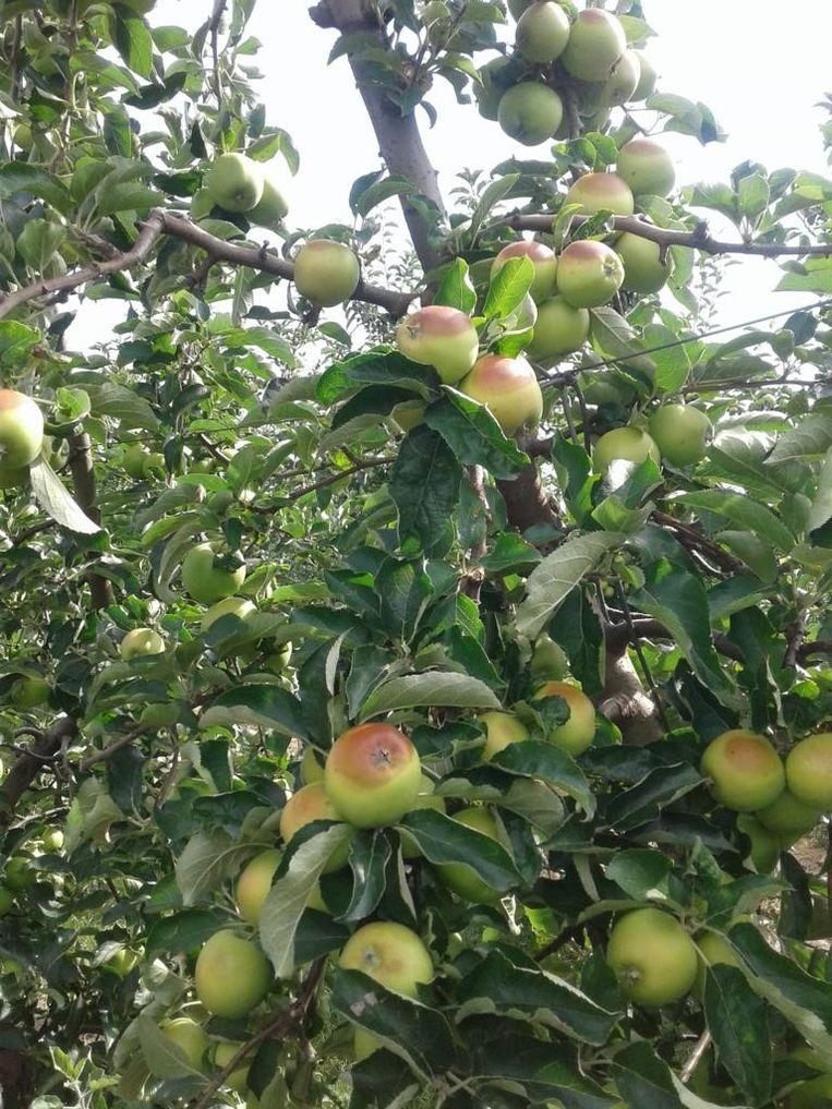 Alle appelen met vlekken zijn onbruikbaar voor de verkoop.