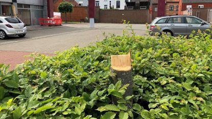 Na oproep politie: weinig tips over fietsende vandaal met kettingzaag