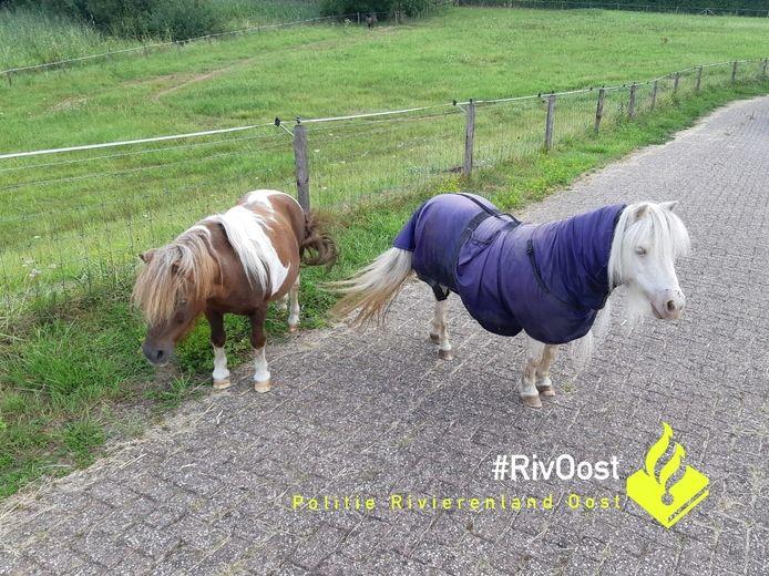 De politie heeft twee pony's van de weg gehaald in Westervoort. De dieren liepen op de Schans.