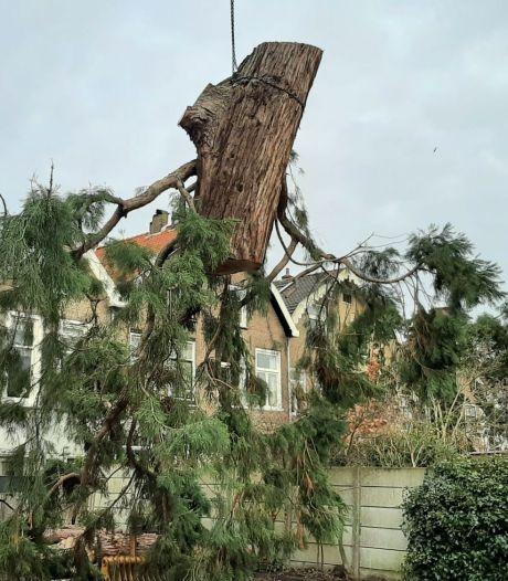 Kettingzaag maakt einde aan 140 jaar oude sequoia aan het Kromhout