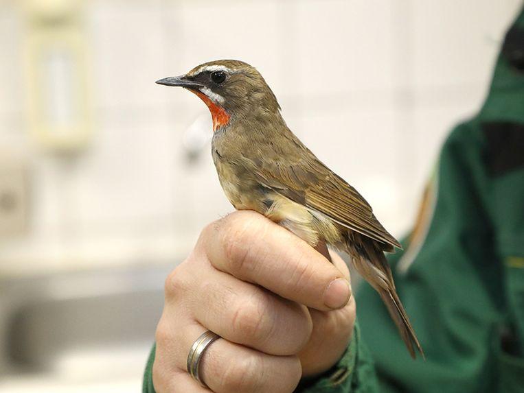 Nog een vogel die in beslag werd genomen