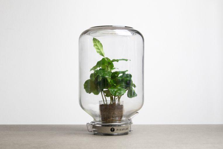 De Pikaplant, een plant die zonder water kan Beeld -