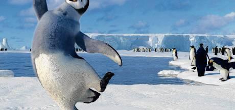 Van Happy Feet tot Ice Ice Baby: met deze kijk- en luistertips hou je het hoofd koel
