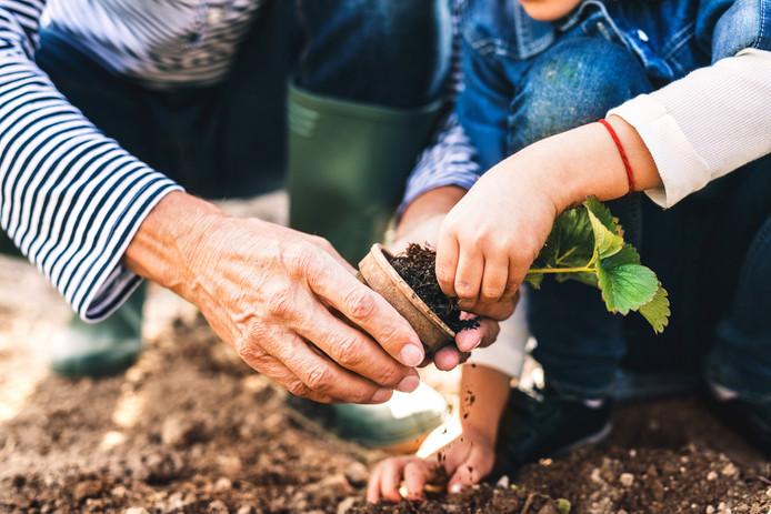 De gemeente Dordrecht wil stimuleren dat meer inwoners hun tuin vergroenen.