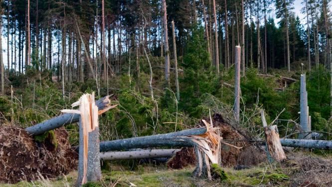 4-jarig kind komt onder boom terecht bij stormweer in Oostenrijk