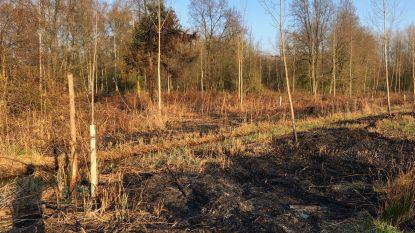 Natuurinspectie onderzoekt  branden in natuurgebied