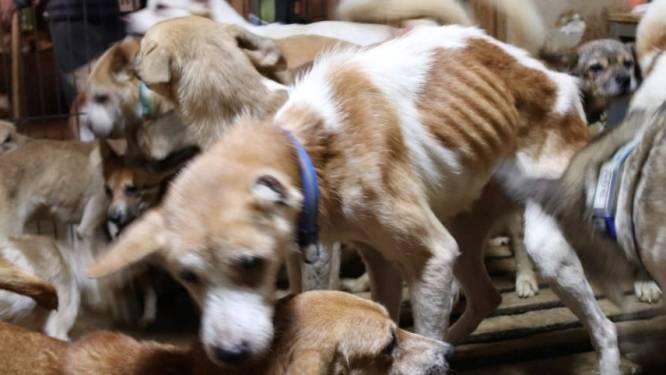 Japanse autoriteiten vinden 164 honden gepropt in klein huisje van 30m2