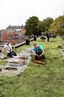 Groene daken erg in trek in Breda: gemeente verhoogt subsidie