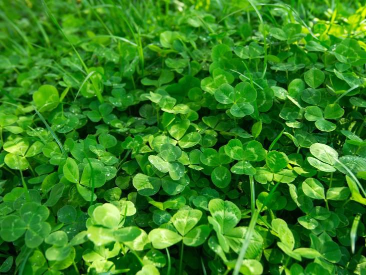 Gazonnetje in tuin is veel werk: 'Weg met dat saaie gras'