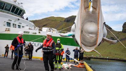 Bevrijde showbeloega's vrijgelaten in IJslands zeereservaat