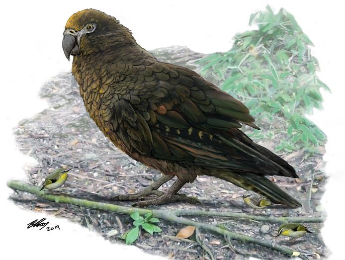 Représentation du perroquet géant