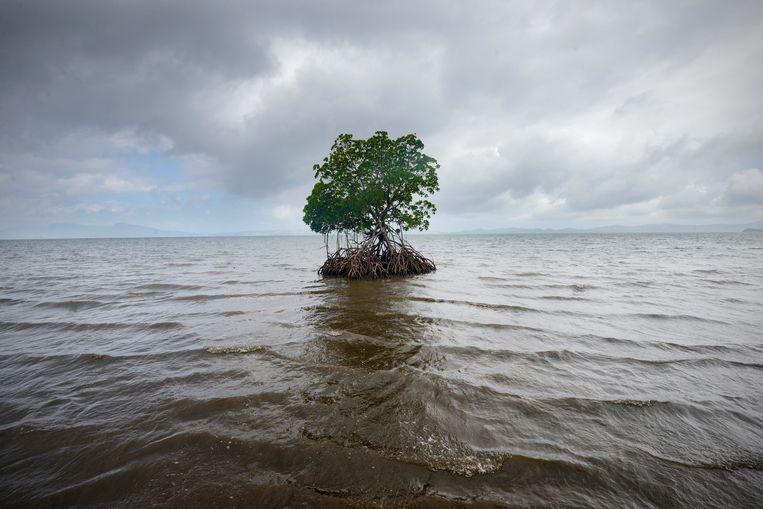 De kustlijn van Vunidogoloa, Fiji. Beeld Kadir van Lohuizen