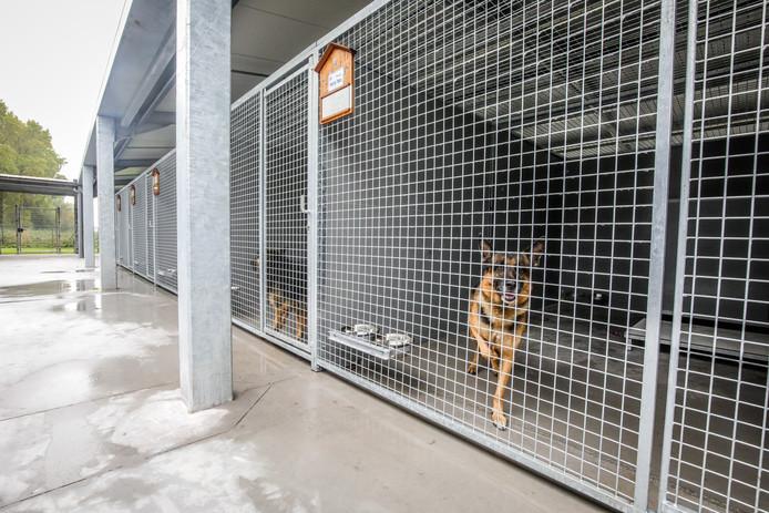 De honden in de ruime buitenhokken.
