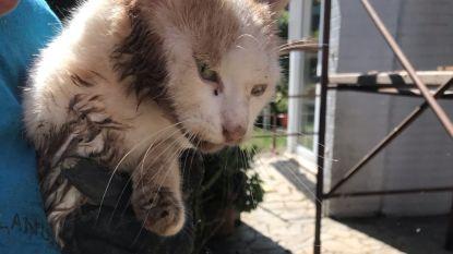 Dakwerkers redden kat Chanel na drie dagen uit afvalcontainer