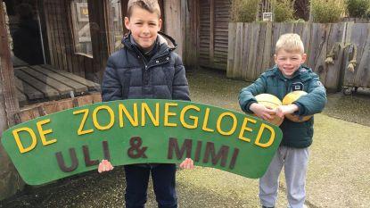 """Broers Lars (10) en Klaas (7) maken 'bereleuk' uithangbord voor berenzussen Uli en Mimi. """"Onze rosse centjes sparen we voor De Zonnegloed"""""""