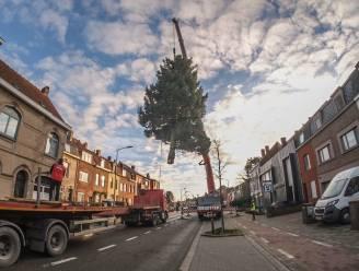 Grootste kerstboom van het land staat niet in Brussel, maar in Kortrijk