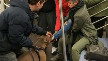 """Pitbull valt vrouw aan in metro en wil niet meer lossen: """"Maar ze heeft het zelf uitgelokt"""""""