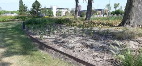 Ook het Burgemeester Geukerspark in Helmond is dor, maar overleeft de hitte prima