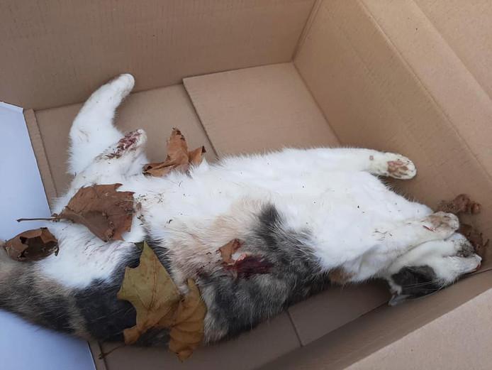 De doodgeschoten Dollie in een doosje. In het midden van haar zij is een rode vlek te zien waar zij volgens haar baasje Margreet Benjamins werd geraakt door een kogel uit een luchtbuks.