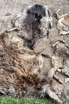 Eigenaar dumpte hertenhuiden uit frustratie in Oude IJssel
