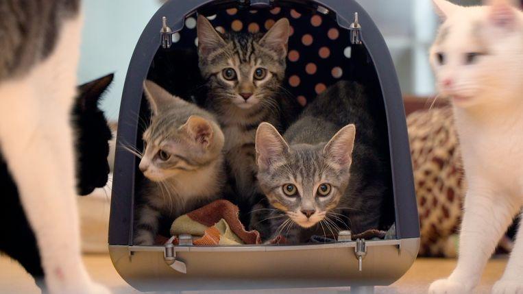 In Cat Stories onderzoekt filmmaker Carmen Cobos de emotionele redenen van miljoenen Nederlandse families om een kat als huisdier te houden. Beeld
