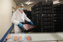 Erik Heinen uit Bunschoten Spakenburg doet vakantiewerk bij een visverwerkingsbedrijf.