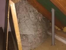Gigantisch wespennest in Lieshout: 'Een meter bij een meter, misschien wel groter'
