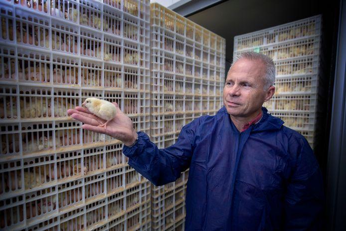 Directeur Cees Horrevorts in de eerste aardgasloze kuikenbroederij van Nederland, bij Van Hulst in Veldhoven.