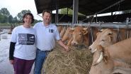 """Biohoeve-slagerij De Vierklaver viert twintigste verjaardag met klanten: """"Wij zien onze dieren oprecht graag"""""""