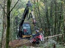 Sociaal Groesbeek over houtkap door Staatsbosbeheer: 'Zonde van ons bos'