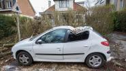Omgewaaide bomen komen op auto's terecht