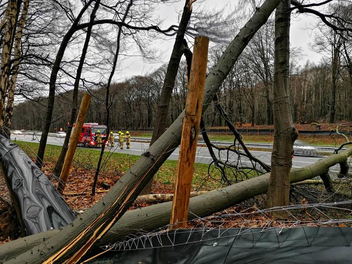Er staat zondag een flinke file van Ede naar Arnhem op de Rijksweg A12. Er zijn meerdere bomen omgevallen.