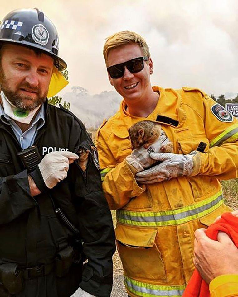 Een possum en haar baby konden door de brandweer van New South Wales gered worden. Beeld AP